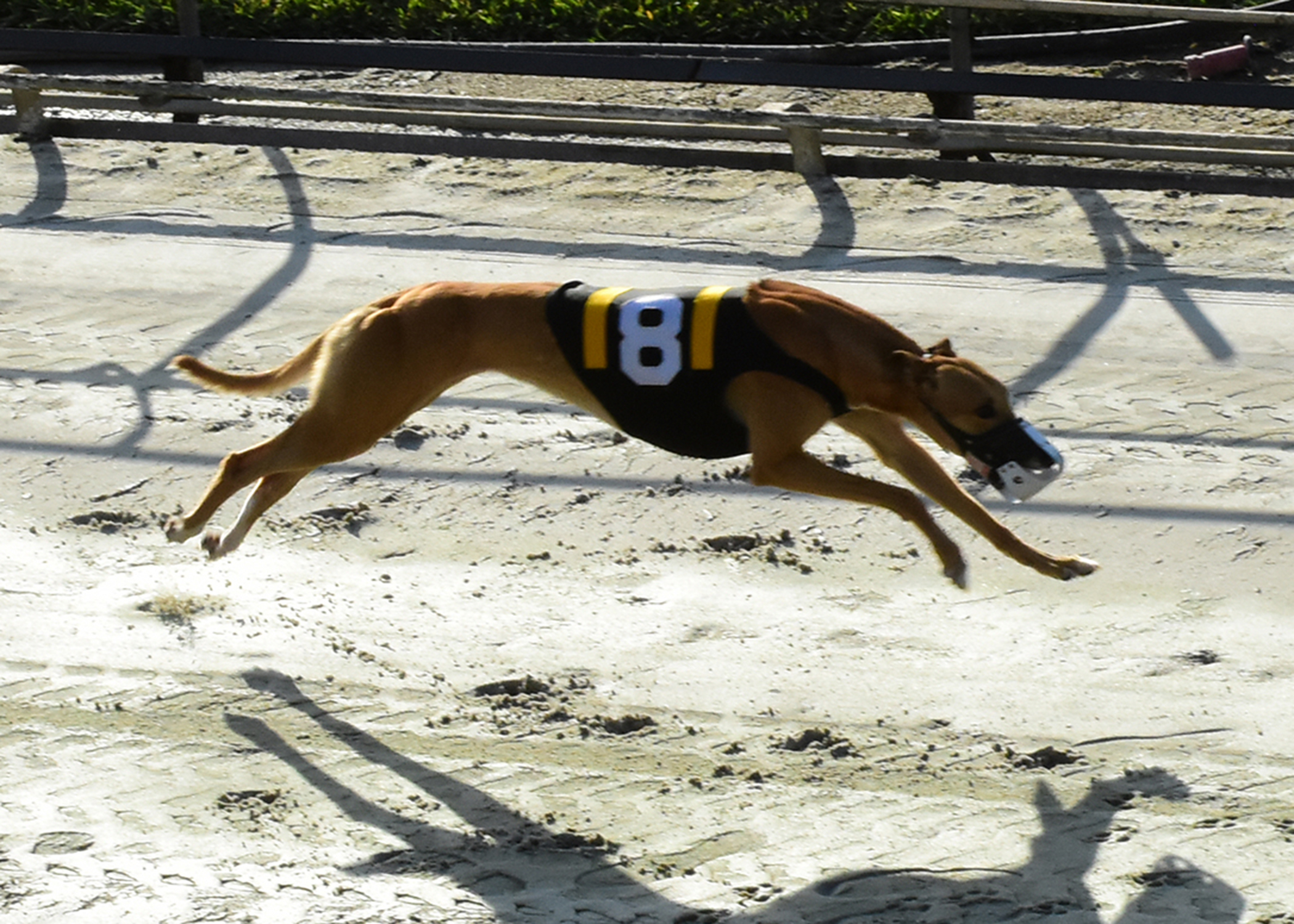palm beach kennel club pdf